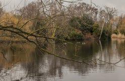 Parques de Londres - ramas y aguas imagen de archivo libre de regalías