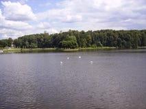 Parques de Moscú, río, playa, patos en el agua fotografía de archivo libre de regalías