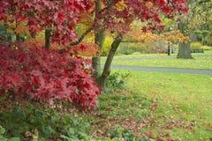 Parques de Southampton en otoño imagen de archivo libre de regalías