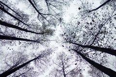 Parques del bosque del otoño de Moscú, Rusia detalles foto de archivo