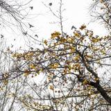 Parques del bosque del otoño de Moscú, Rusia detalles fotografía de archivo