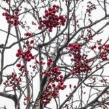 Parques del bosque del otoño de Moscú, Rusia detalles foto de archivo libre de regalías