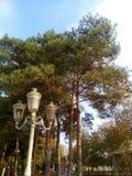 Parques del otoño, céspedes amarillos, una linterna en un fondo de pinos, un cielo cubierto fotos de archivo