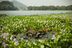 Parques do Sul da China Fotografia de Stock