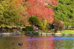 Parques en otoño, Inglaterra de Londres foto de archivo libre de regalías