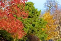 Parques en otoño, Inglaterra de Londres fotografía de archivo libre de regalías