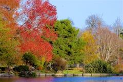 Parques en otoño, Inglaterra de Londres fotos de archivo