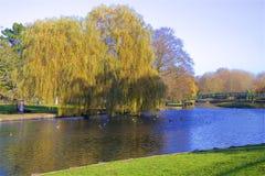 Parques en otoño, Inglaterra de Londres imagen de archivo libre de regalías