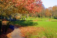 Parques en otoño, Inglaterra de Londres imagenes de archivo