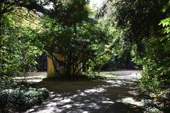 Parques en un bosque Foto de archivo libre de regalías