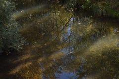 Parques en un bosque Fotos de archivo libres de regalías