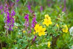 Parques nacionais de Alaska Imagens de Stock Royalty Free