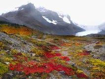 Parques nacionales canadienses en Alberta imagenes de archivo