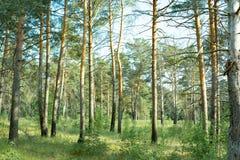 Parques naturais da região de Moscou, floresta quieta bonita fotografia de stock