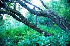 Parques naturales de la región de Moscú imágenes de archivo libres de regalías