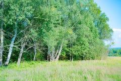 Parques naturales de la región de Moscú, la belleza de la naturaleza rusa fotos de archivo