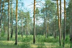 Parques naturales de la región de Moscú, bosque reservado hermoso de A, donde hay bayas y animales imagen de archivo libre de regalías