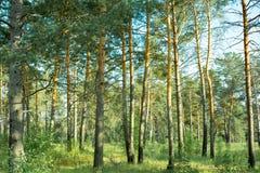 Parques naturales de la región de Moscú, bosque reservado hermoso, donde hay setas y bayas foto de archivo libre de regalías