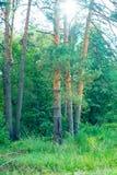 Parques naturales de la región de Moscú, el Sun, bosque reservado hermoso imágenes de archivo libres de regalías