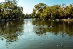 Parques verdes del lago imágenes de archivo libres de regalías