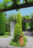 Parques y jardines hermosos - cultivar del thuja con un pedazo de la cerámica del terracota fotografía de archivo