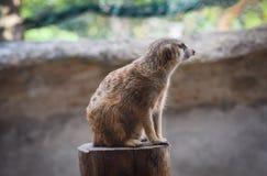 Parques zoológicos de Meir Cats Foto de archivo libre de regalías
