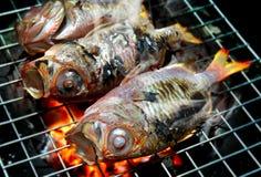 Parrilla de los pescados en el carbón de leña Fotografía de archivo libre de regalías