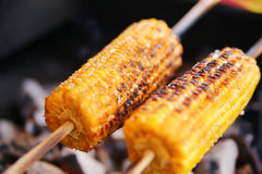 Parrilla del maíz Fotos de archivo