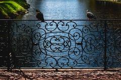 Parrilla y palomas Fotografía de archivo libre de regalías