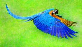 Parro πετάγματος macaw Στοκ Εικόνες