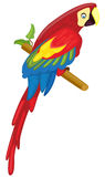 Parrot. (Red Macaw) - Vector illustration Royalty Free Stock Images