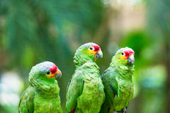 Parrot птица стоковое фото