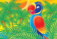 Parrot 001. Illustration Stock Images