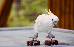 Parrot. A lovely parrot was performing rolling on the ground Stock Photo