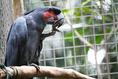 Parrot Stock Photography