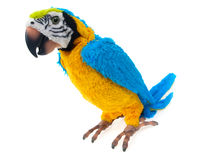 Parrot. Toy parrot isolated on white background Royalty Free Stock Photography
