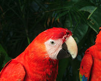 Parrot. In cancun stock photos
