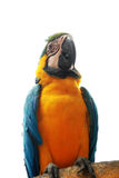 Parrot Stock Photos