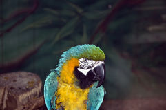 Parrot. In a cage at the zoo stock images