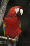 Parrot. In a zoo in Spain royalty free stock image
