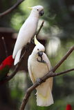 Parrot. A cute and colorful parrot from the tropical rainforest Stock Image