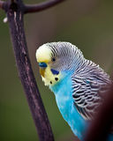 Parrot. A parrots on a branch Stock Photo