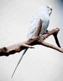 Parrot. A parrots on a branch Stock Image