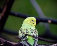 Parrot. A parrots on a branch Stock Images