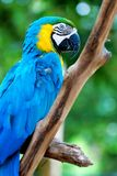 Parrot. Closeup of colorful parrot standing Stock Photo