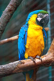 Parrot. Beautiful parrot on a branch Stock Photography