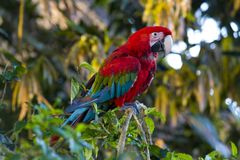 Free Parrot Stock Photography - 1972522