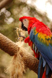 Parrot #2 Royalty Free Stock Photography