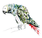 Parrot. Drawing illustration of a parrot Royalty Free Stock Images
