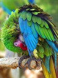 Parrot. In the Leesburg animal park stock images